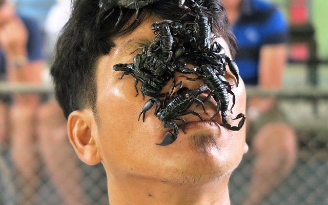 que recherche un homme scorpion chez une femme