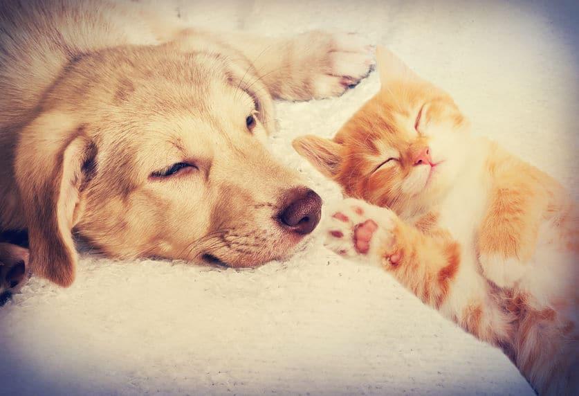 Présenter un chien à son chat ou comment éviter un fiasco!